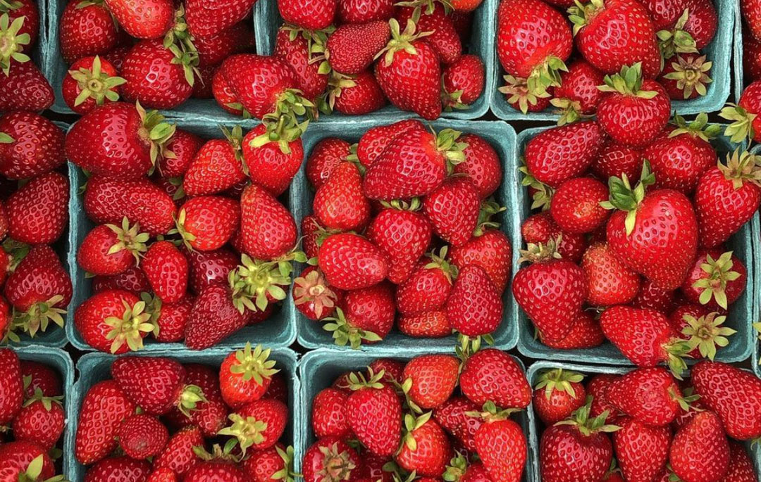 organic farmed strawberries in biodegradable containers