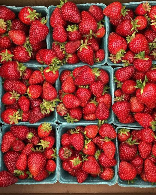 organic strawberries from the healthy hooch farm