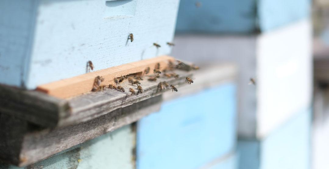 bees on the healthy hooch farm
