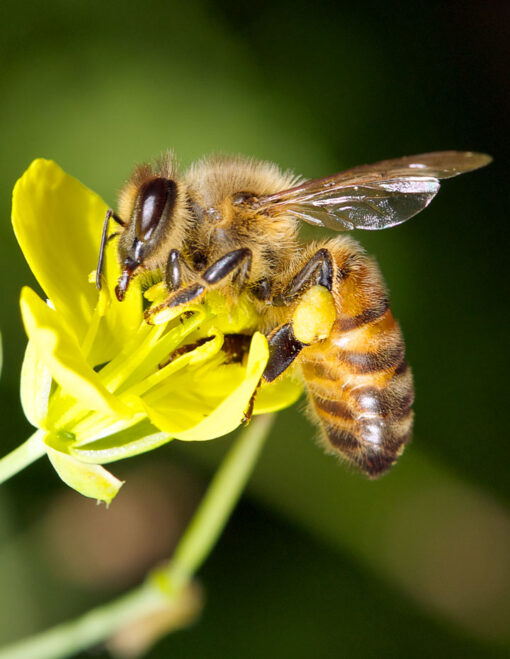 bee on a flower with greenery in the background