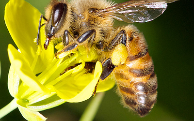 Save the Bees | Bees are Buzzworthy