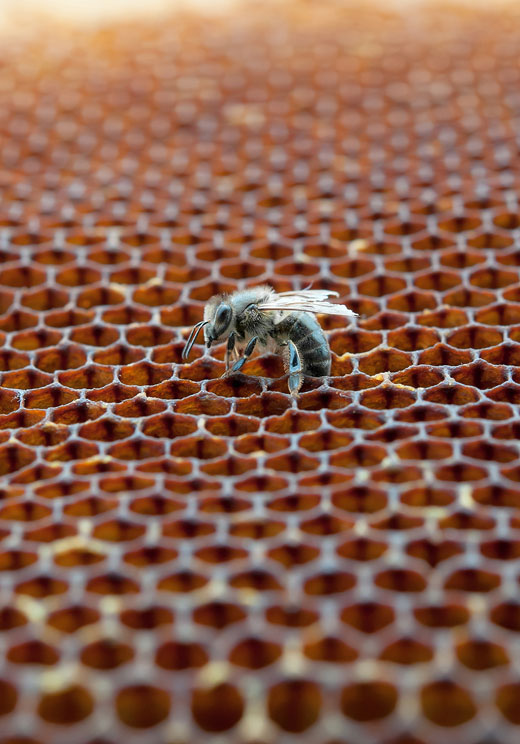 working bee on it's hive